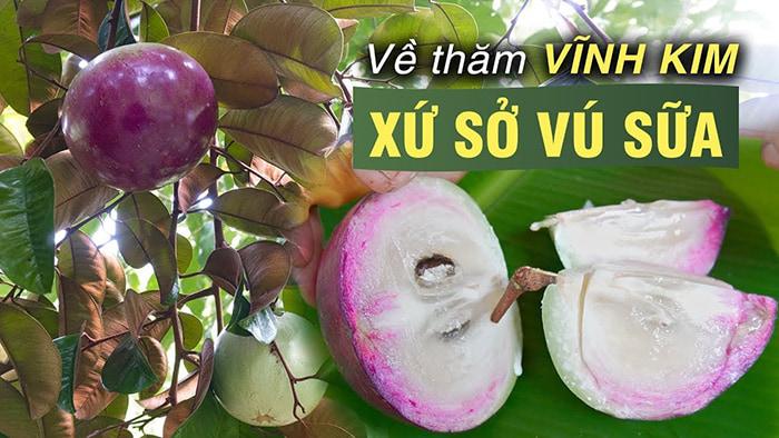 Bật mí 5 vườn trái cây Tiền Giang - Đặc sản