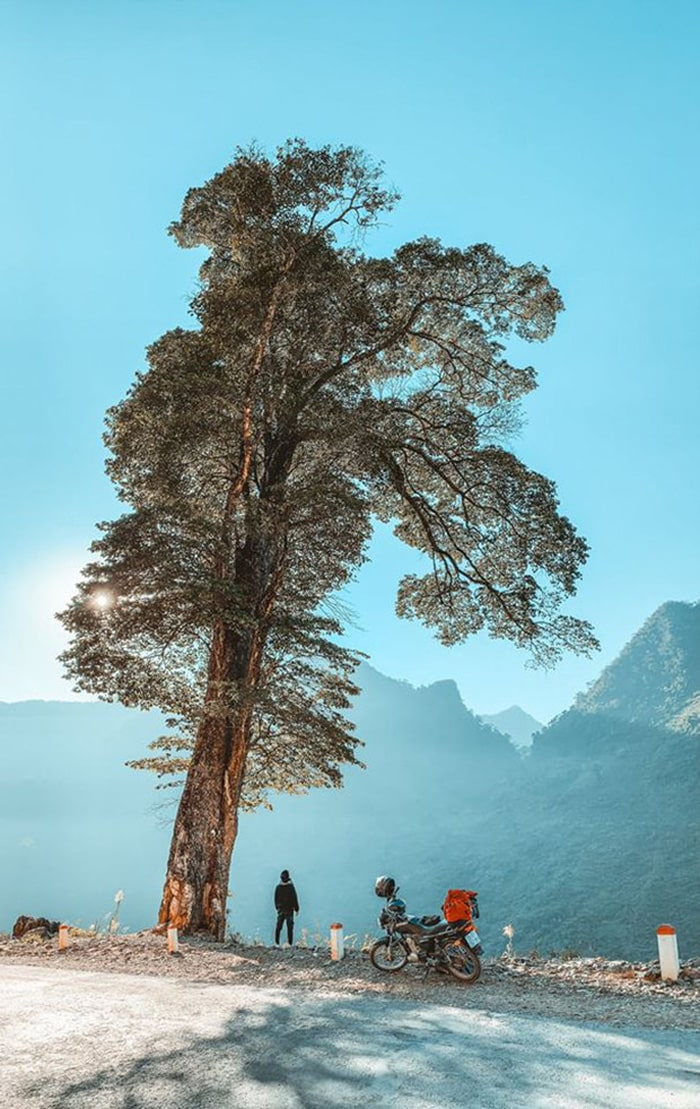 Lonely tree beauty Ha Giang