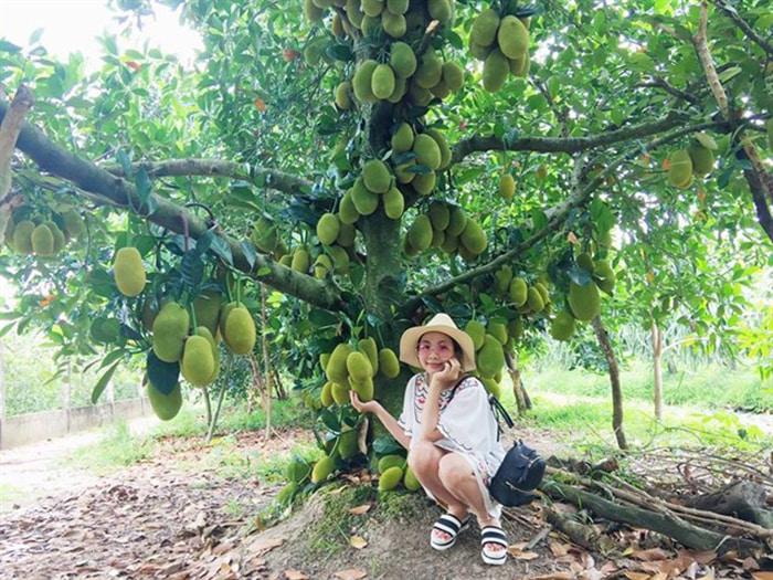Bật mí 5 vườn trái cây Tiền Giang - Điểm du lịch sinh thái