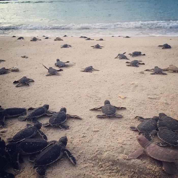 du lịch Côn Đảo tháng 4 - xem rùa đẻ trứng