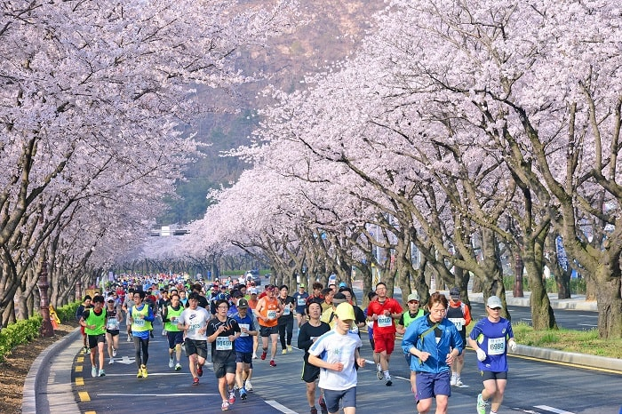 du lịch Hàn Quốc tháng 4 - marathon Gyeongju