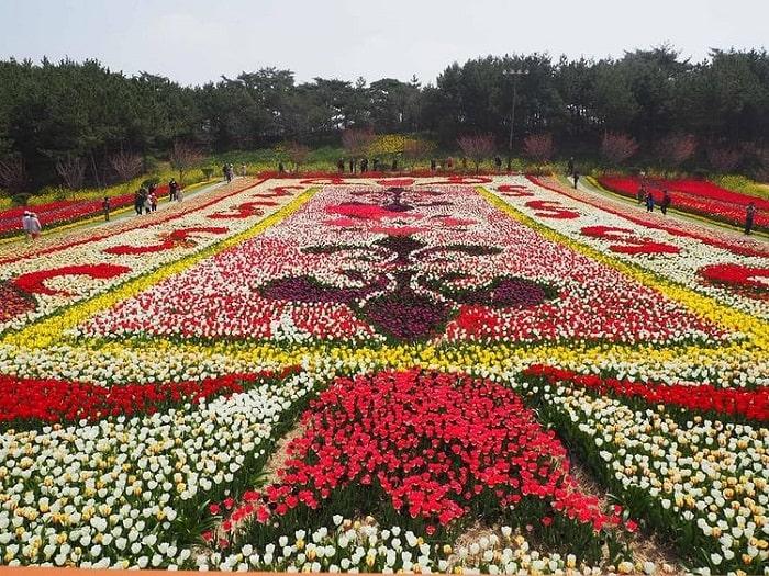 du lịch Hàn Quốc tháng 4 - lễ hội hoa tulip Taean