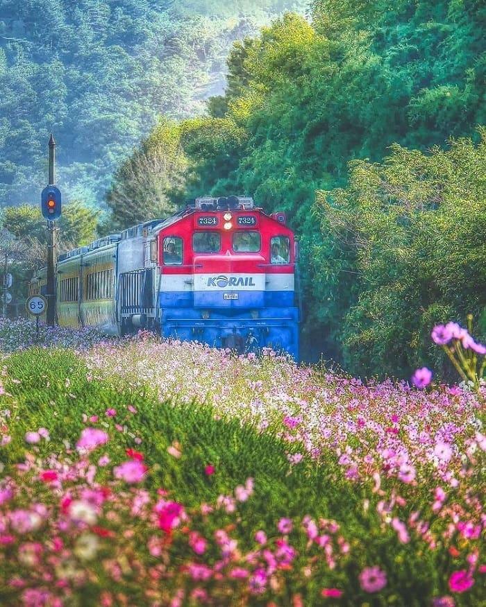 du lịch Hàn Quốc tháng 4 - ngắm cảnh đẹp