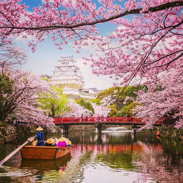 What month to travel to Japan - March's cherry blossoms