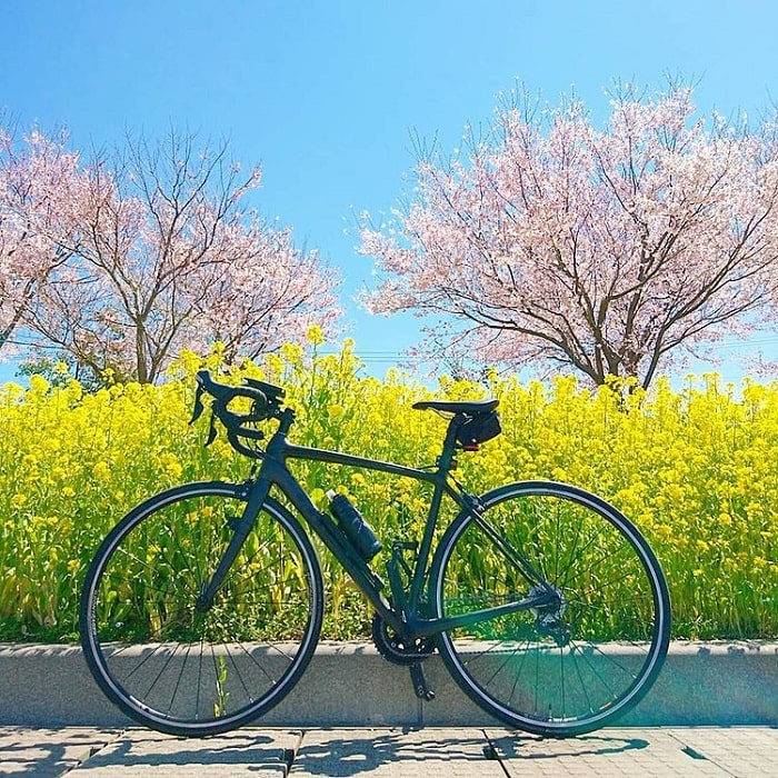 What month to travel to Japan - April flower season
