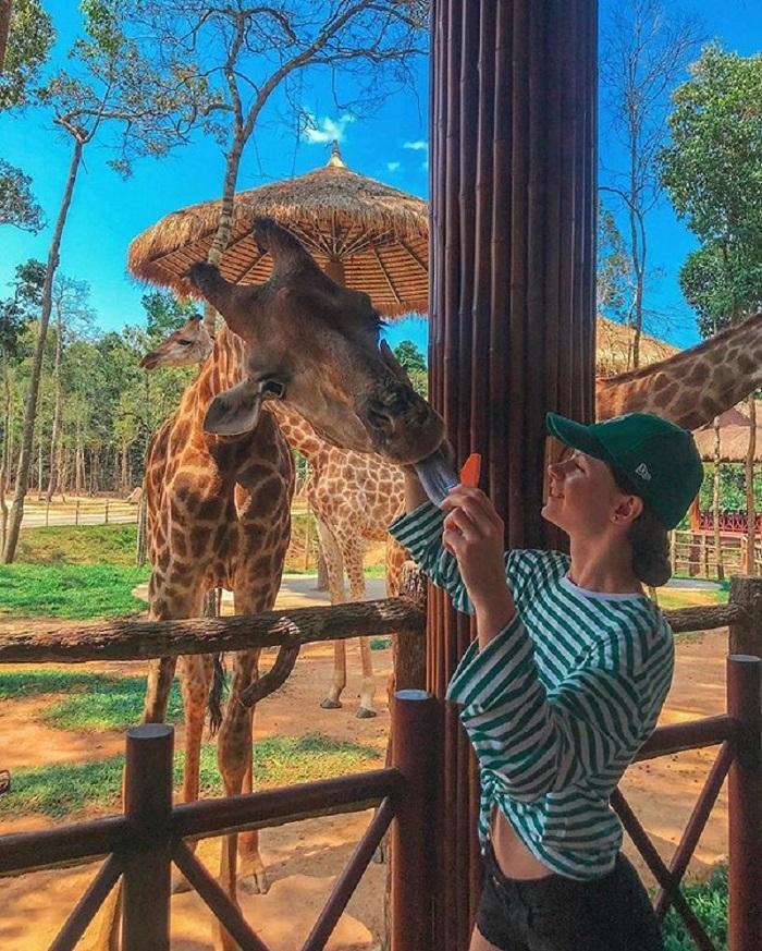 Phu Quoc travel 3 days 2 nights - Safari Phu Quoc