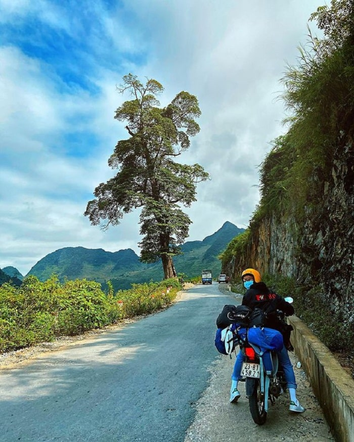 Move to the lonely tree Ha Giang
