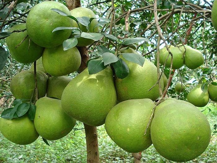 Bật mí 5 vườn trái cây Tiền Giang - Lạc vào một khu vườn cổ tích