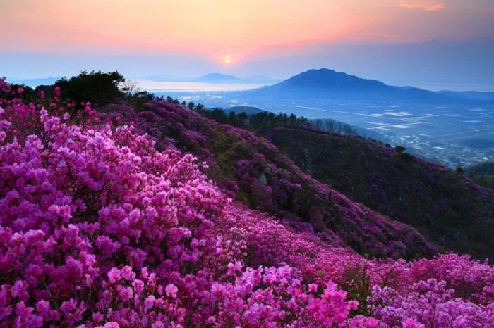 Du lịch Sapa tháng 3 - chiêm ngưỡng sắc hoa đỗ quyên