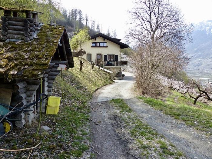 Cảnh đẹp tuyệt vời ở Saxon - Những điểm ngắm hoa mùa xuân ở Thụy Sĩ