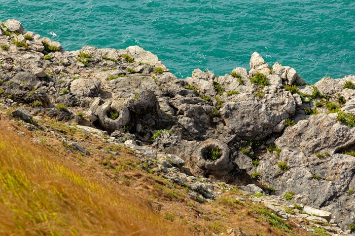 Fossil Forest is a cluster of fossilized stumps - Jurassic Coast