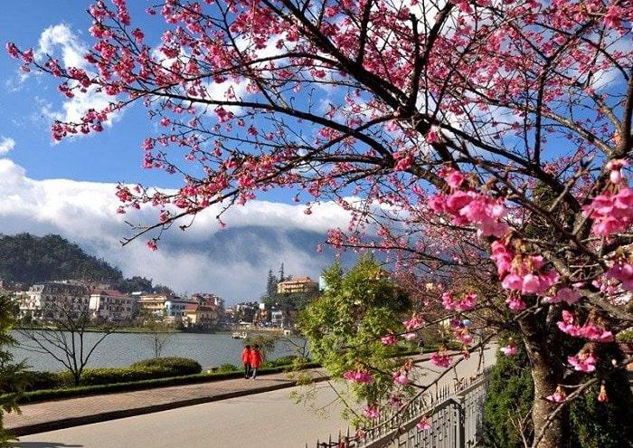Du lịch Sapa tháng 3 - chiêm ngưỡng hoa đào nở muộn