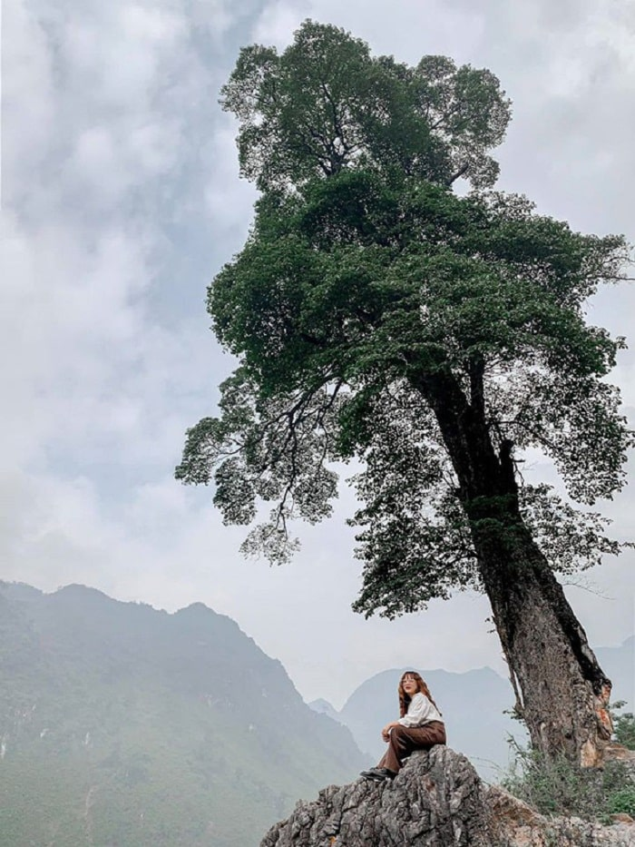 Check in at the lonely tree Ha Giang