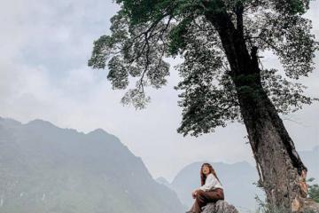 Hà Giang cũng có cây cô đơn đẹp chẳng kém nơi nào như thế này đây!