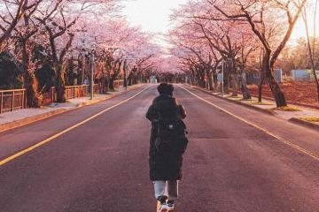 Du lịch Hàn Quốc tháng 4: ngắm hoa anh đào, trải nghiệm lễ hội mùa xuân đặc sắc