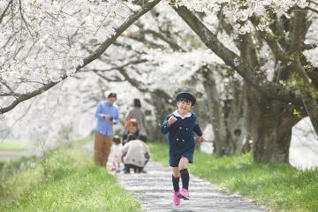 Nên đi du lịch Nhật Bản tháng mấy đẹp nhất?