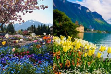 Đủ sắc màu hoa xuân tại những điểm ngắm hoa đẹp nhất ở Thụy Sĩ