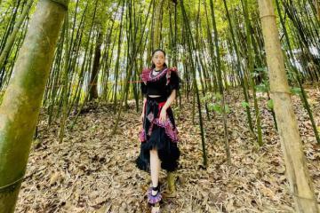 Đến Khu du lịch Rừng Vàng Sơn La ghé thăm rừng trúc đẹp như phim trường kiếm hiệp