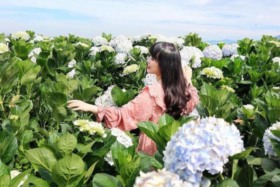 Vi vu Đà Lạt tháng 4 check in những vườn hoa khoe sắc rực rỡ