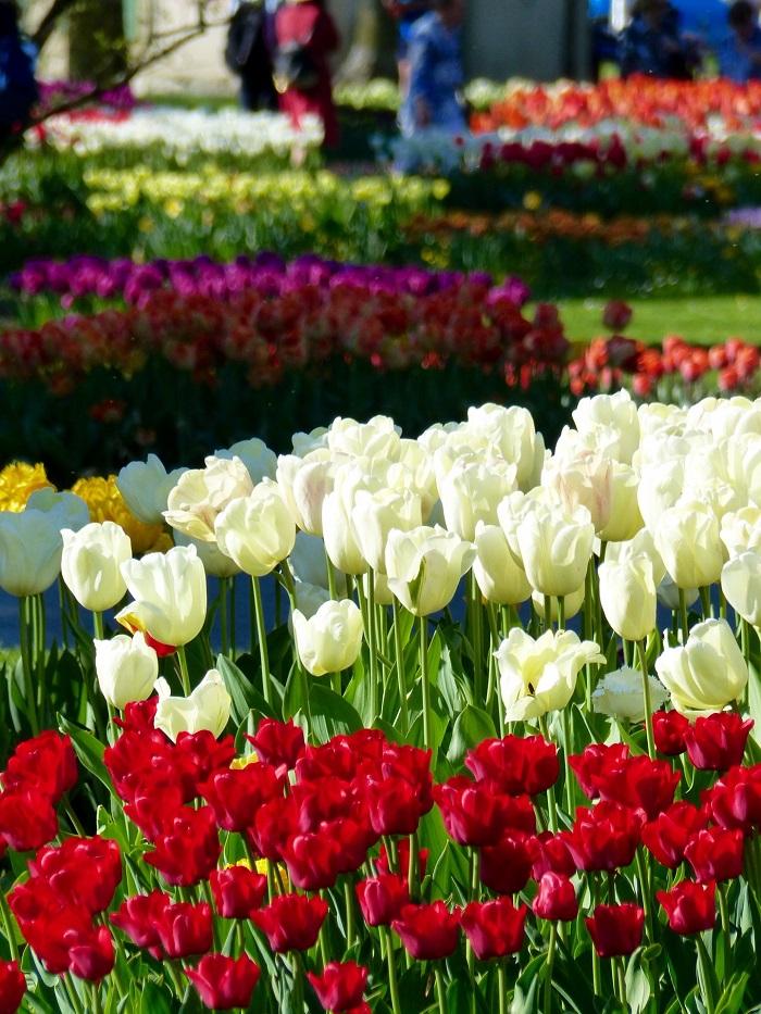 Những điểm ngắm hoa mùa xuân ở Thụy Sĩ