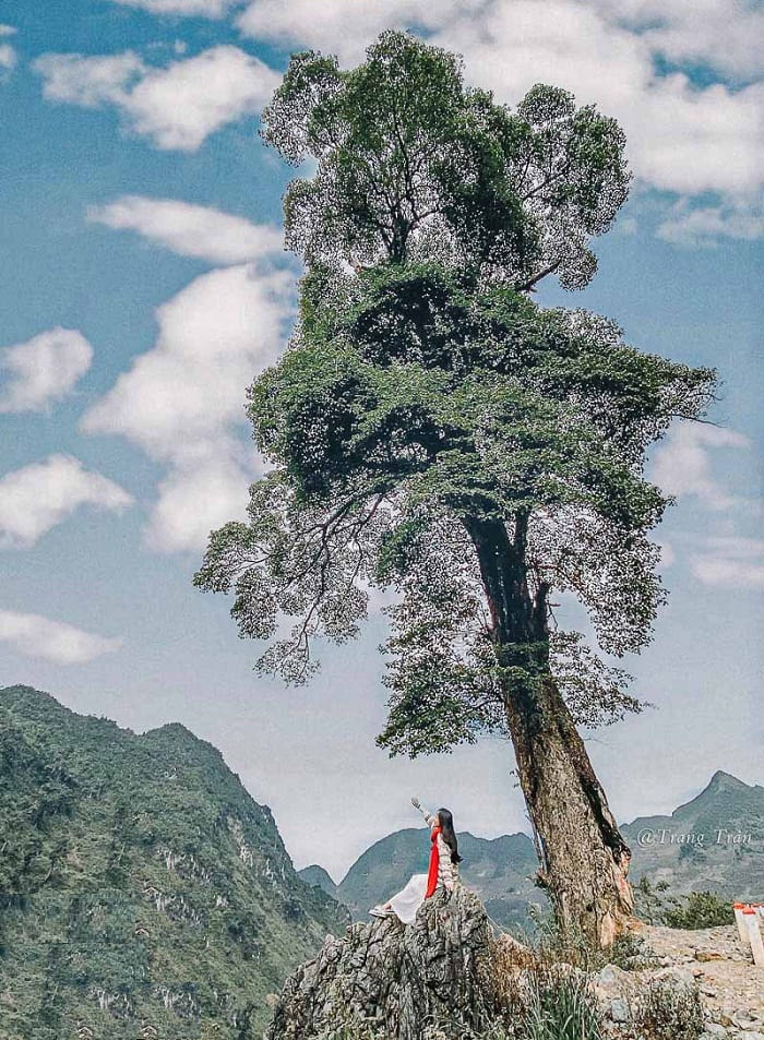 Introduction of lonely tree Ha Giang