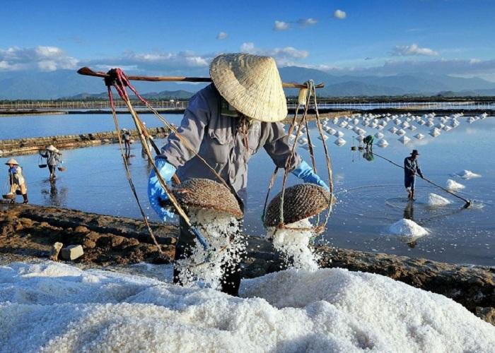 The beauty of Phuong Cuu salt field in harvest season