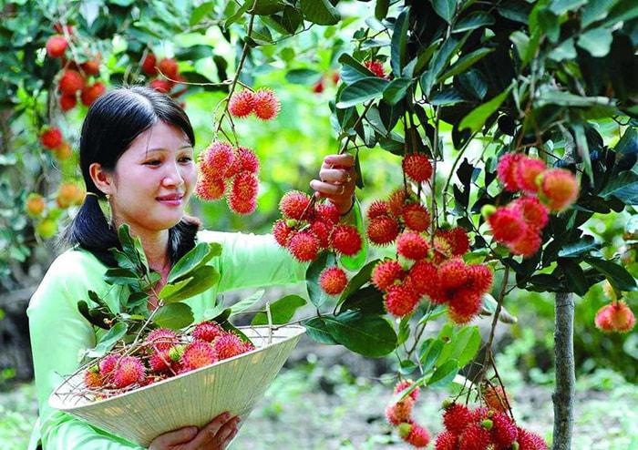 Bật mí 5 vườn trái cây Tiền Giang - Vĩnh Kim