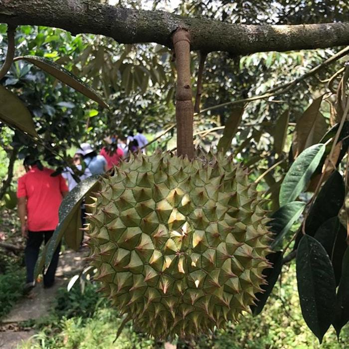 Bật mí 5 vườn trái cây Tiền Giang - Vườn trái cây Anh Linh