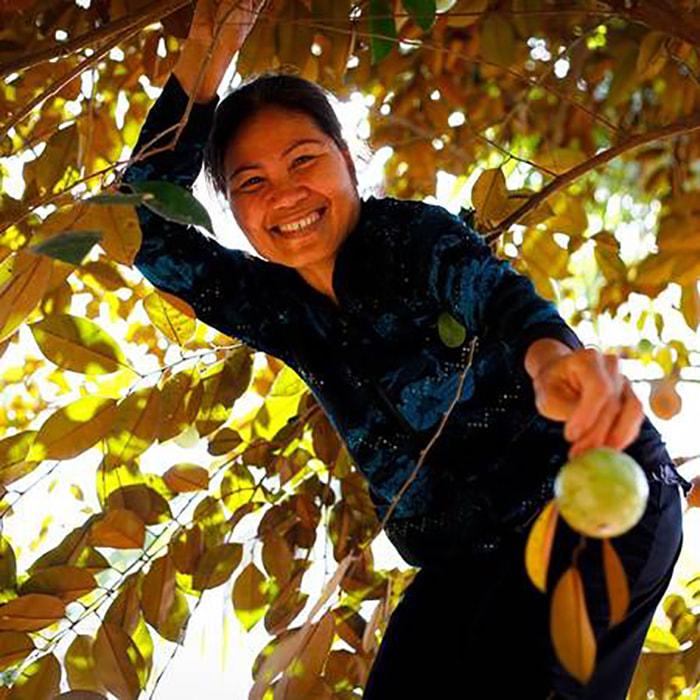 Bật mí 5 vườn trái cây Tiền Giang - Vườn trái cây Vĩnh Kim