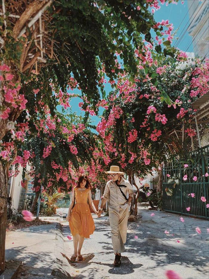 Điểm du lịch thành phố Nha Trang với đường hoa giấy tuyệt đẹp