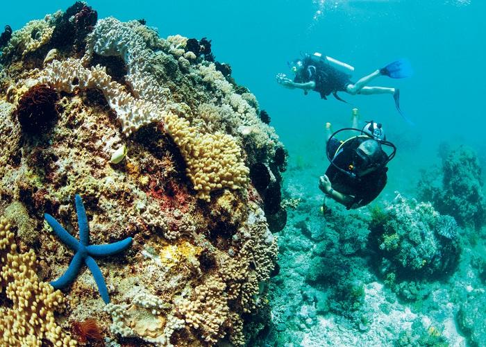 lặn biển du lịch đà nẵng