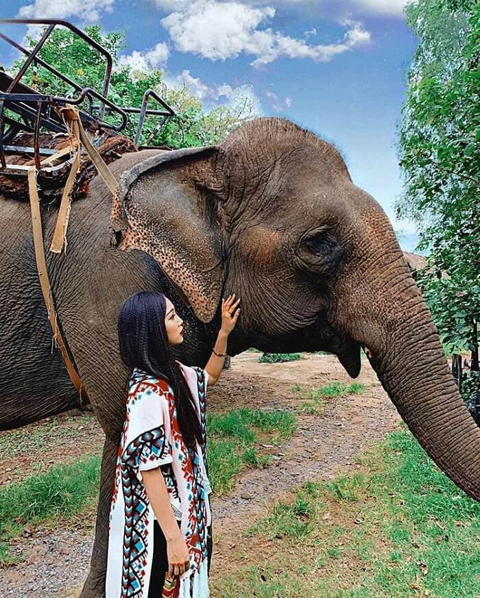 Du lịch Buôn Đôn thăm 'chú voi con ở Bản Đôn' huyền thoại