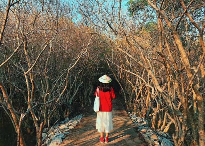 Tận hưởng thế giới bình yên ở rừng ngập mặn Rú Chá xứ Huế