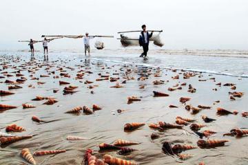Khám phá con đê ốc viết dài nhất Việt Nam ở Bình Đại - Bến Tre