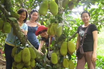 Khám phá vườn trái cây Lái Thiêu ngon nức tiếng ở Bình Dương