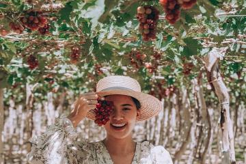 'Phá đảo' 5 vườn trái cây Ninh Thuận nổi tiếng