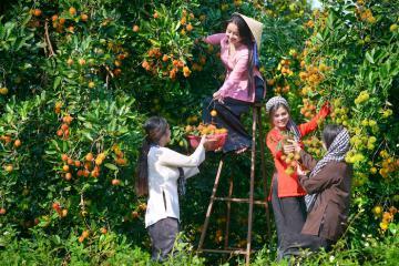 Top 10 vườn trái cây Cần Thơ hấp dẫn hàng đầu miền Tây