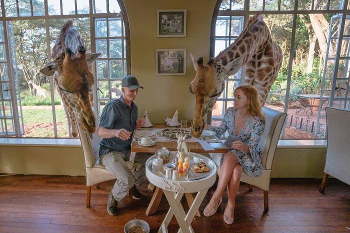 Giraffe Manor là nơi có những chú hươu cao cổ dễ thương - Khách sạn độc đáo nhất thế giới
