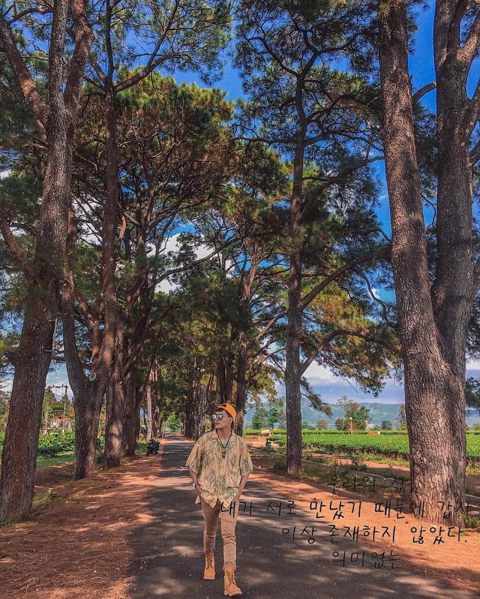 Biển Hồ chè - đồi chè đẹp ở Việt Nam được 'săn lùng' nhiều nhất