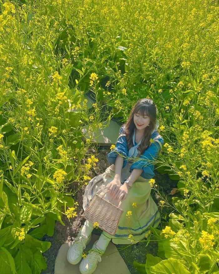 cải vàng - sắc nắng hiếm hoi mùa đông ở Thung lũng hoa hồ Tây