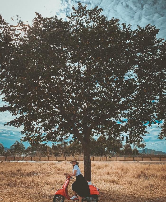 phụ kiện - thứ làm bức ảnh chụp với cây cô đơn ở Đắk Lắk thêm sinh động