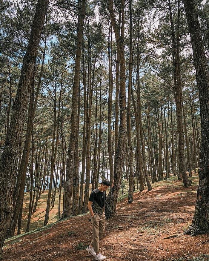 Yen Minh pine forest - tourist destination near En Ha Giang cave