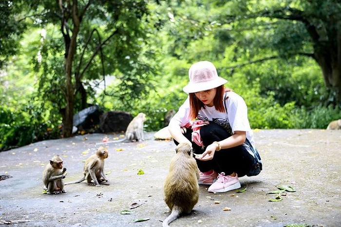 cho khỉ ăn - hoạt động hay tại Đảo Khỉ Cát Bà