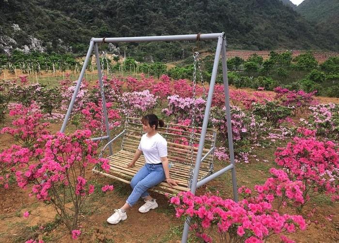 swing - virtual habitat of azalea forest in Cao Bang