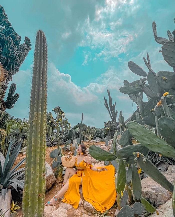 Chụp hình ở vườn xương rồng Cactizone