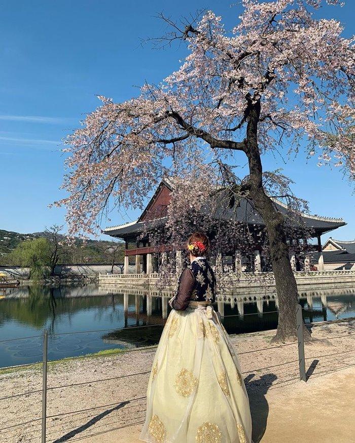 Gyeongbokgung Palace beautiful cherry blossom viewing place in Korea ở