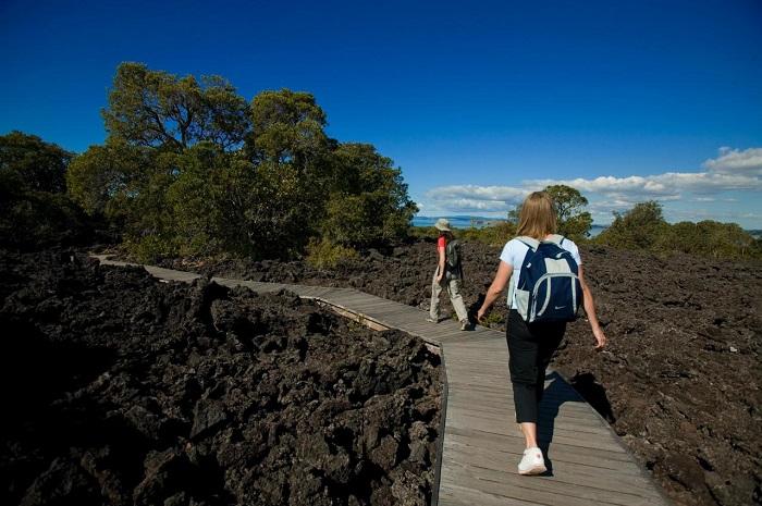 Những con đường trên đảo được hình thành từ tro núi lửa - Hướng dẫn du lịch đảo Rangitoto ở New Zealand