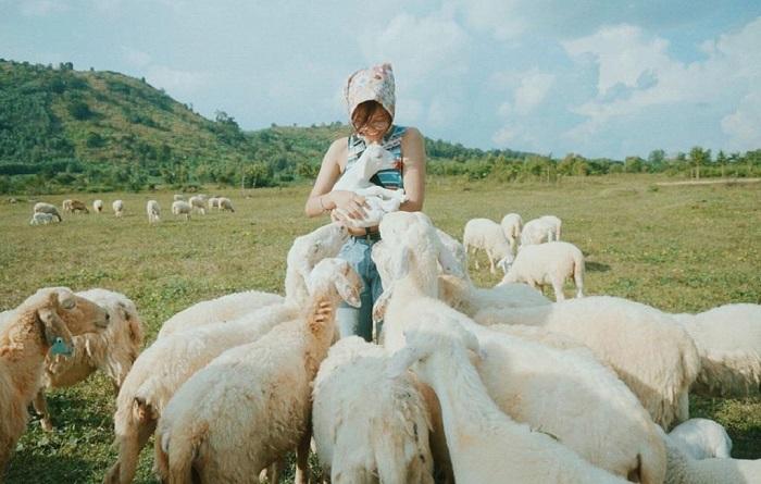 Trại cừu Yên Thành - Địa điểm chụp ảnh đẹp ở Nghệ An