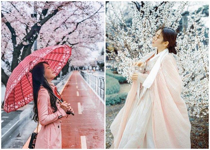 Chìm đắm trong giấc mơ hoa với những địa điểm ngắm hoa anh đào đẹp ở Hàn Quốc