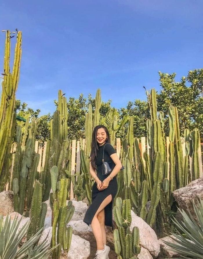 Vườn xương rồng Cactizonecó gì hot